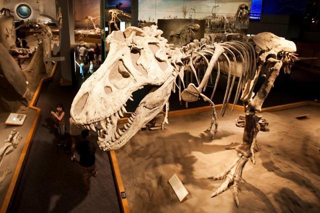 画像: 恐竜ファンのあなたに贈る!カナダ・アルバータ州 恐竜ロマン旅6日間|クラブツーリズム