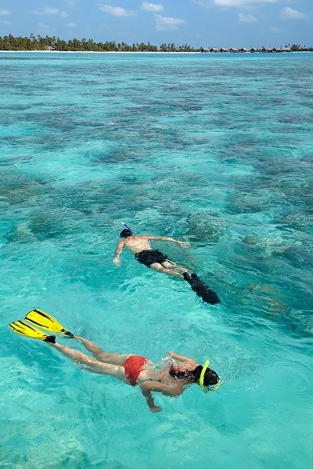 画像: サンゴ礁の海をシュノーケル