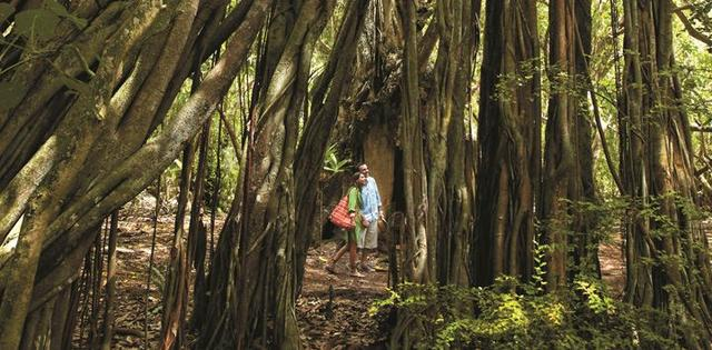 画像: モルディブのリゾートでは珍しいジャングルがある