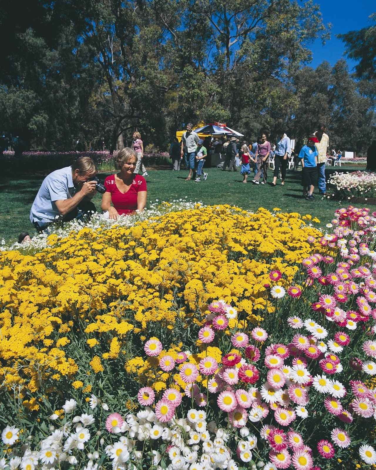 画像: ワイルドフラワーフェスティバルの様子(※花は自然現象なのでご覧いただけない場合があります)