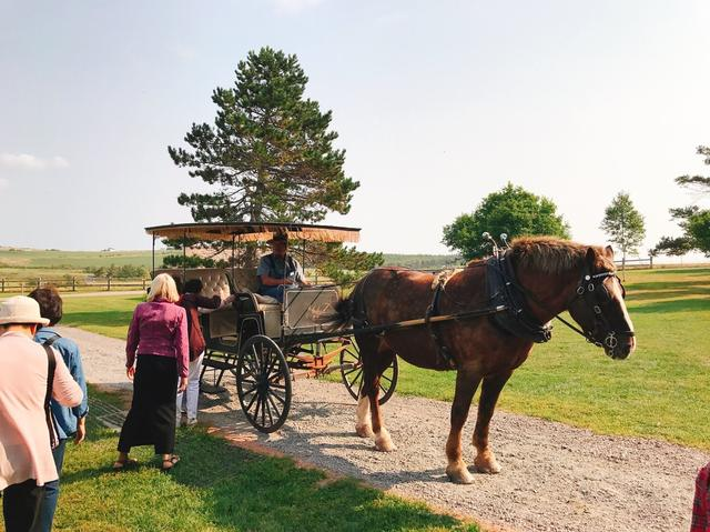画像: 馬車体験!