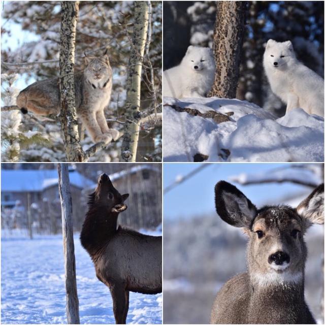 画像: 野生動物保護区の動物たち/写真提供:和田様撮影・弊社スタッフ 荒井撮影