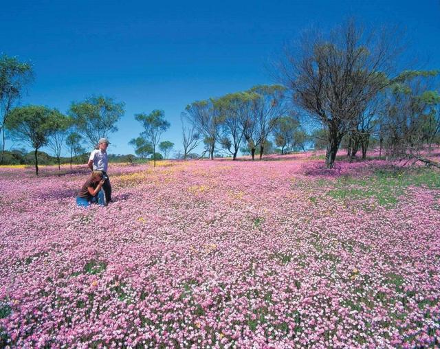 画像: 『ANA新規就航!成田~パース往復直行便 幻の花とワイルドフラワーの花畑を探して 充実のパース7日間』|クラブツーリズム