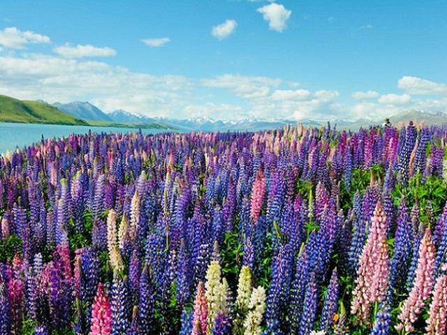画像: 『2つの世界遺産をめぐる ニュージーランドいいとこどり 5日間』|クラブツーリズム