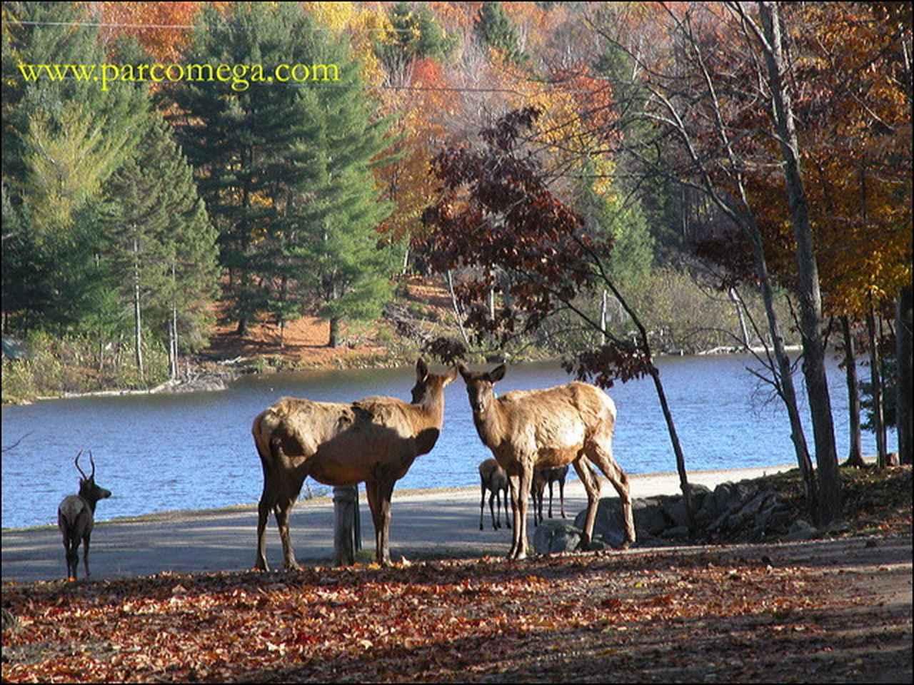 画像: オメガパークのエルクたち/©www.parcomega.com