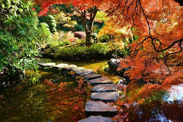 画像: 真っ赤に染まるブッチャードガーデンの紅葉(ビクトリア)