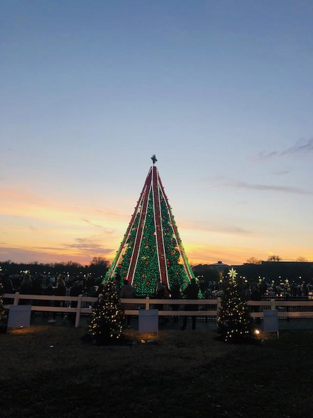 画像: ワシントンD.C.付近の夕暮れ時のクリスマスツリー(イメージ)