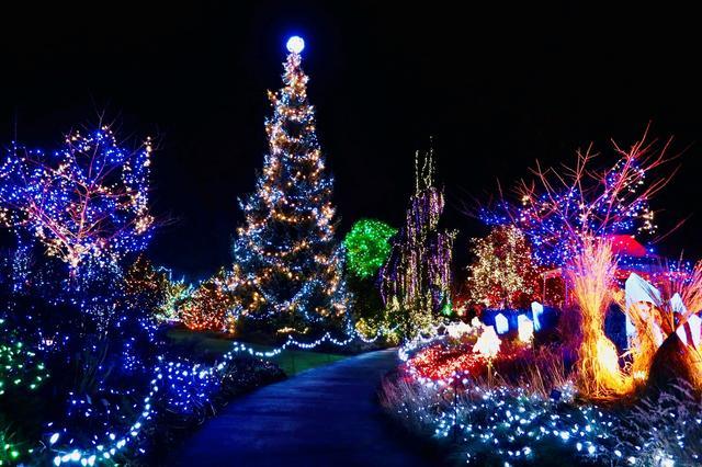 画像1: バンデューセン植物園のライトアップ(イメージ)