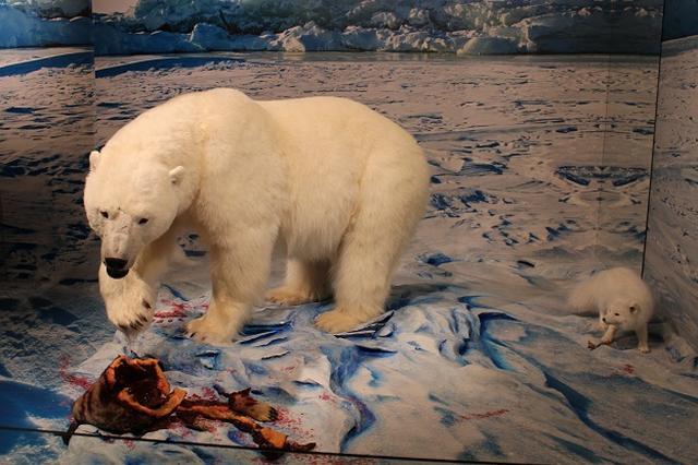 画像: 歴史博物館内シロクマの剥製/イメージ