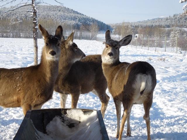 画像: ユーコン野生動物保護区内の動物/弊社スタッフ荒井撮影