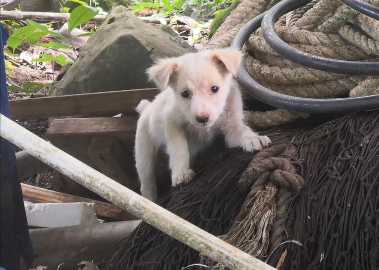 画像: 入り口の子犬は可愛いですが、噛まれないように近づかないようご注意を!