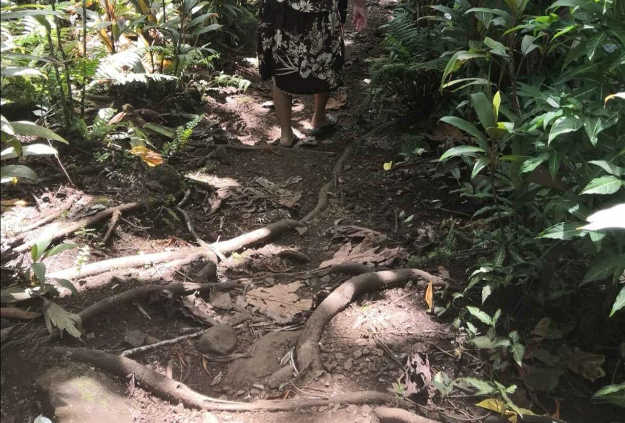 画像: 木の根や石がゴロゴロ
