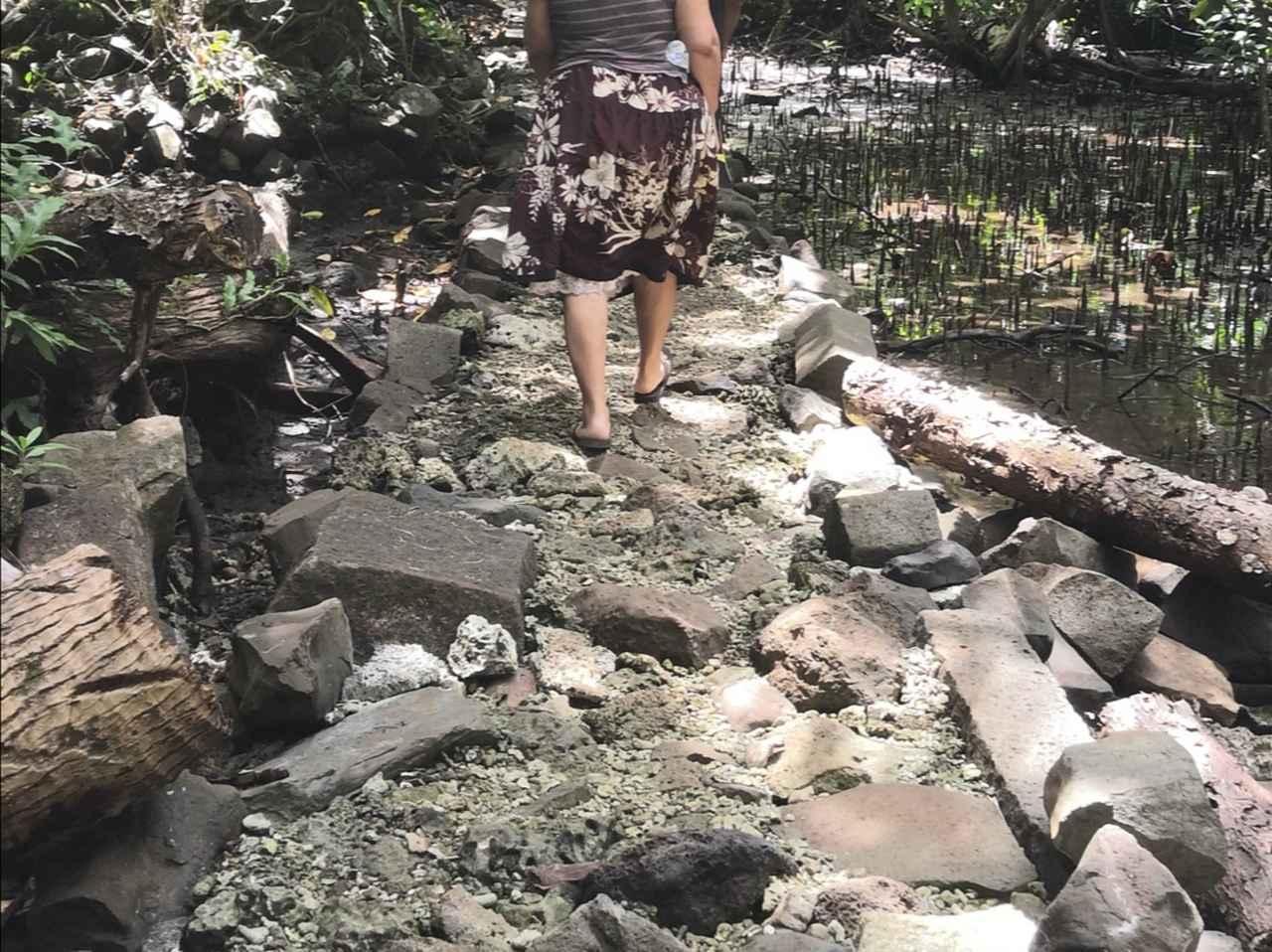 画像: 人工島エリアに入るとサンゴもたくさん!