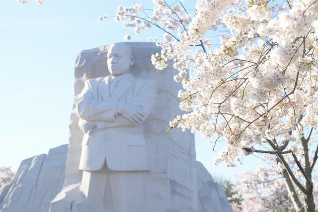 画像: キング牧師記念像とポトマック川の桜(企画担当者撮影)
