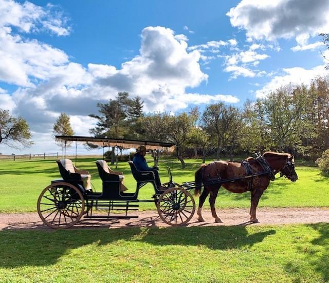 画像: マシューとアンと同じように馬車に乗馬/弊社スタッフ和田撮影