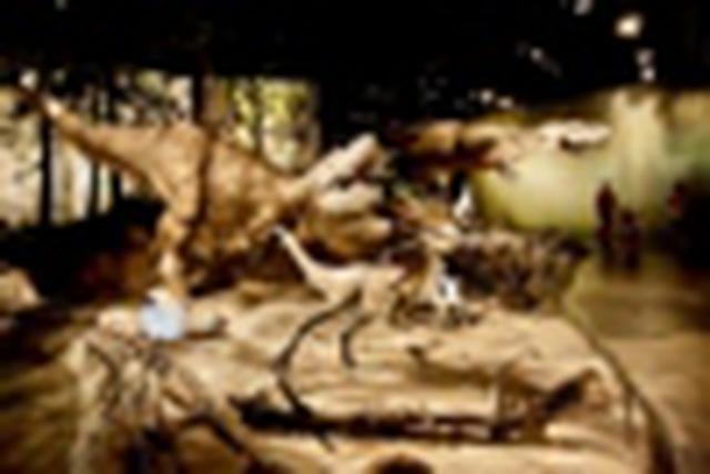 画像: 『往復直行便ビジネスクラス利用(成田~カルガリー間)恐竜ファンのあなたに贈る!カナダ・アルバータ州 恐竜ロマン旅 6日間』 カルガリー4連泊|クラブツーリズム