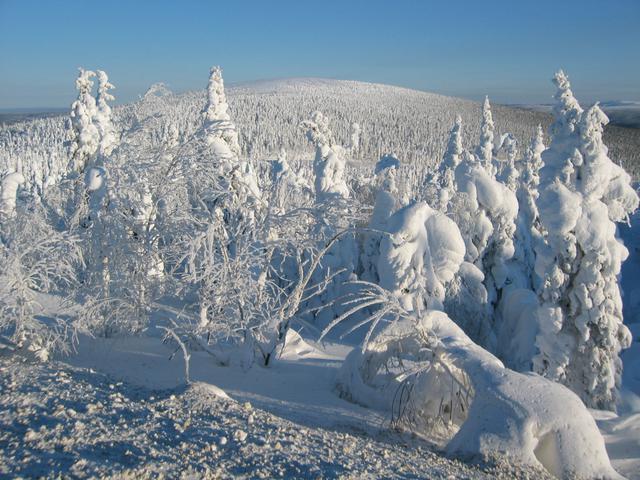 画像: スプルースの樹氷原/イメージ