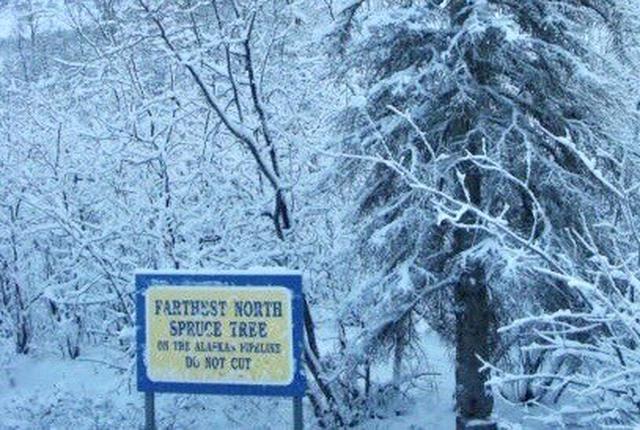 画像: 『森林限界』の看板