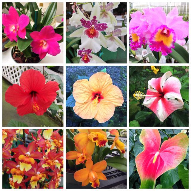画像: 6月に咲き誇る花たち/イメージ