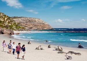画像: 『オーストラリアの秘境「野生動物の楽園の島」カンガルー島 3連泊 6日間』|クラブツーリズム