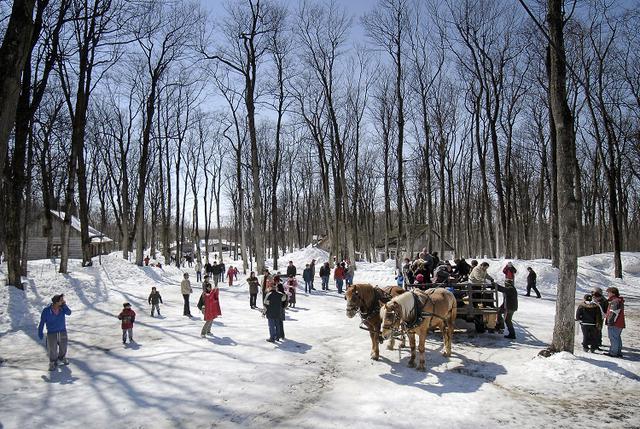 画像: (メープル林の中で遊ぶ人々、ホースライドワゴン/イメージ)
