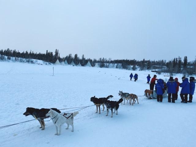 画像: 元気な犬たちが白銀の世界を走行します!/弊社スタッフ和田撮影