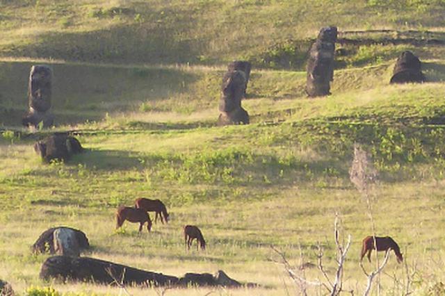 画像: 放牧馬とモアイ像(6月中旬撮影)
