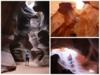画像: 『羽田発着/日本航空プレミアムエコノミークラス利用(※羽田~米国乗継地区間)/アメリカ国立公園たっぷり10日間』 3連泊2回/ラスベガス・グランドサークル|クラブツーリズム
