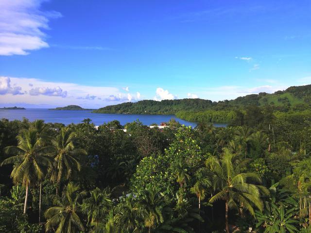 画像: 緑々とした熱帯雨林(クラブツーリズムスタッフ撮影)