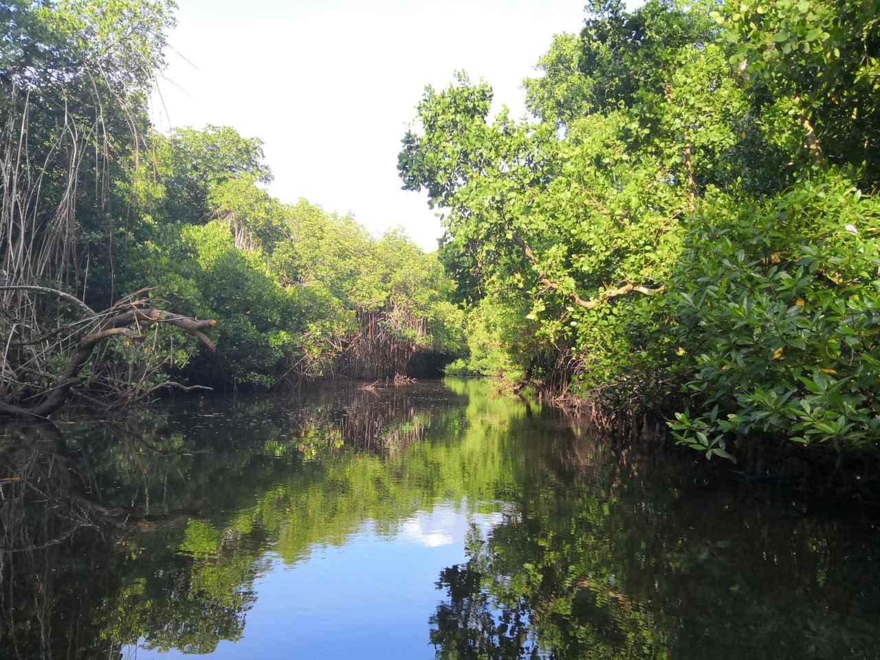 画像: ポンペイ島を囲むマングローブ林(クラブツーリズムスタッフ撮影)