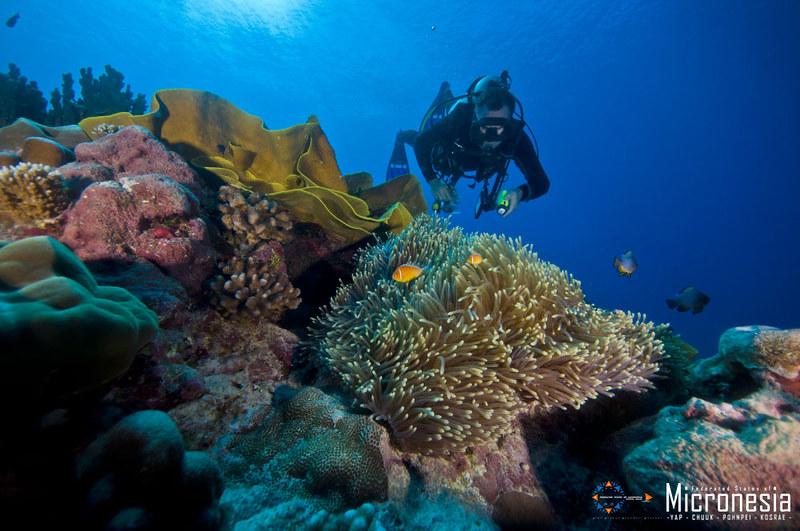 画像: 美しいサンゴ礁の海 (出典:ミクロネシア連邦政府観光局)
