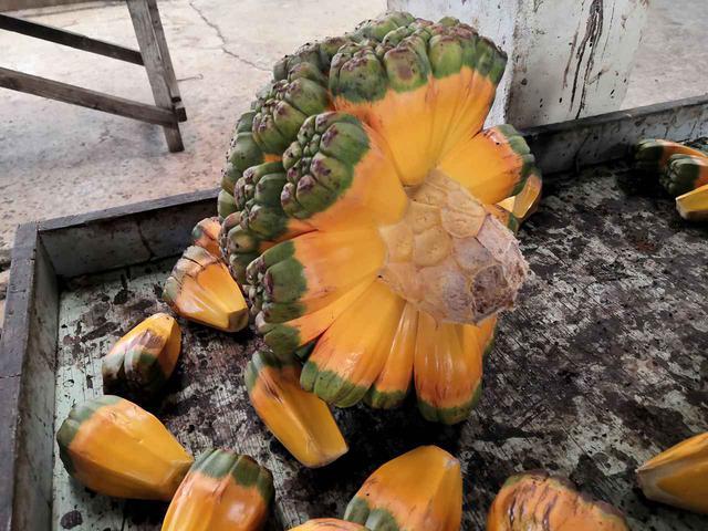 画像: 変わった形の野菜 (クラブツーリズムスタッフ撮影)