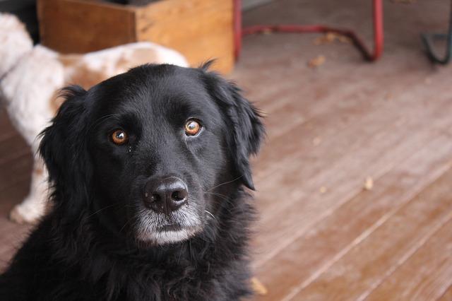 画像: 愛らしいニューファンドランド犬はこの島が原産地