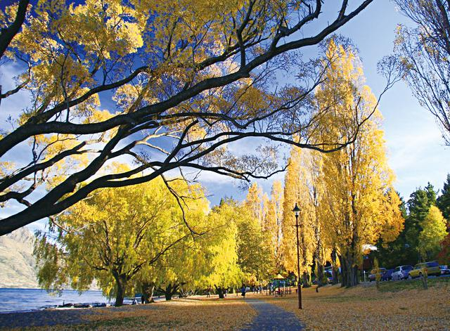 画像: クィーンズタウン・ワカティプ湖畔の黄葉(イメージ)
