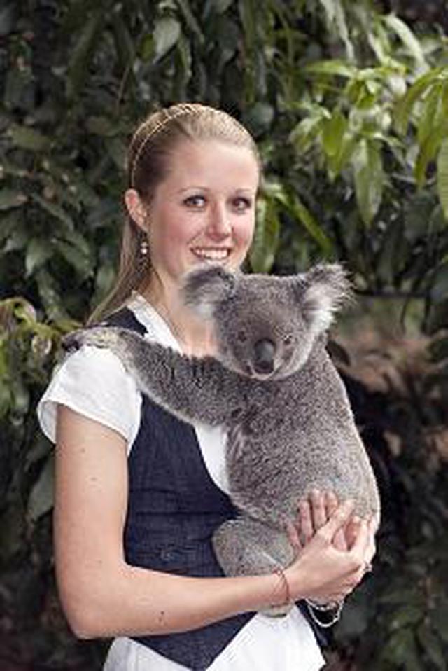 画像: 愛くるしく癒されますが、ずっしりと重たいコアラ(イメージ)