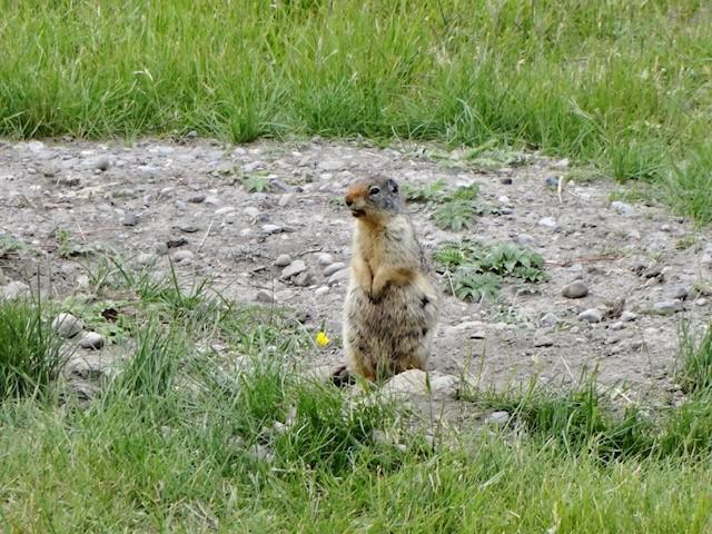 画像: キャンモアの町で出会った小動物!(スタッフ撮影)
