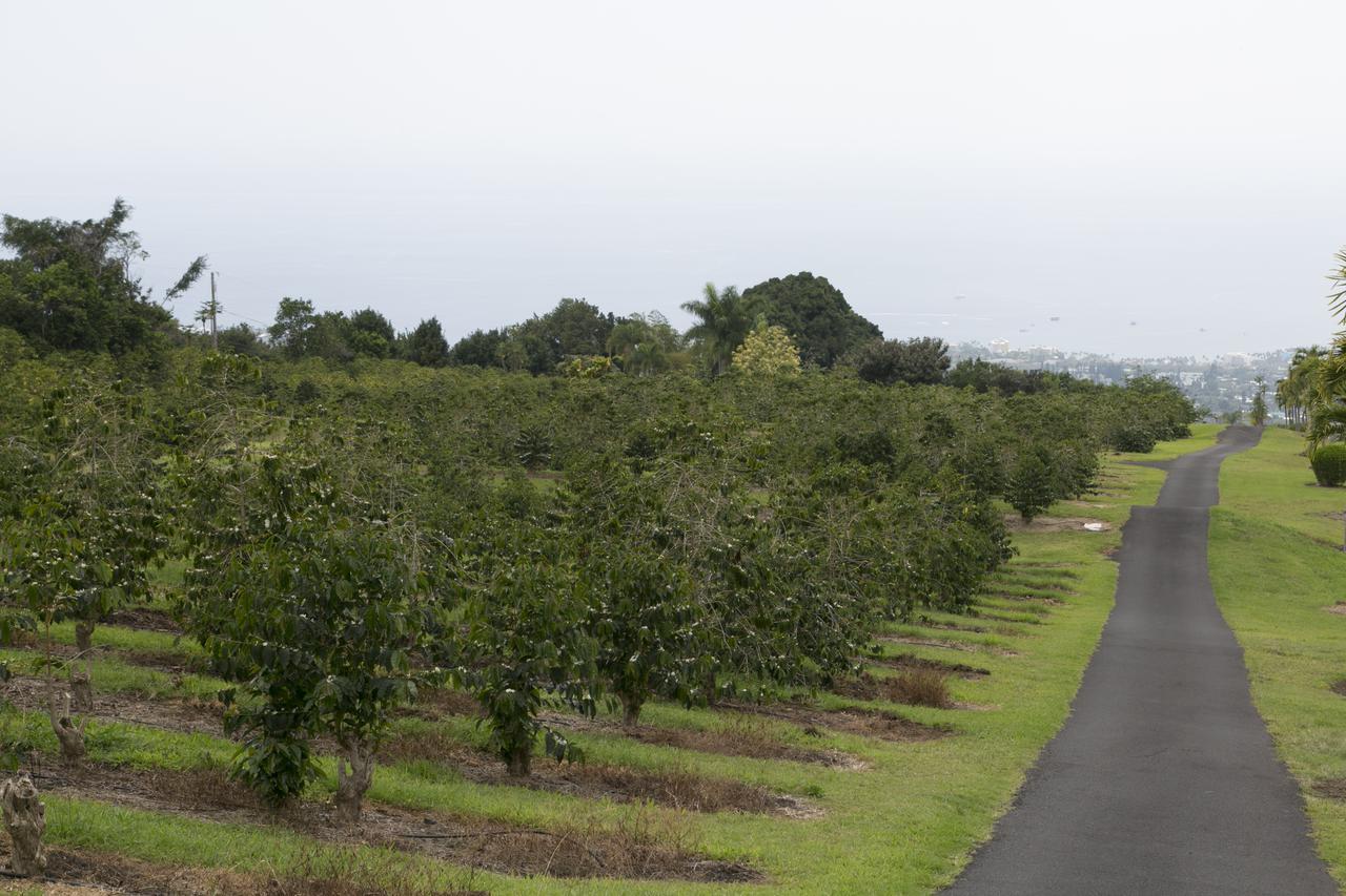 画像: 広大なコナコーヒー農園(弊社スタッフ撮影)