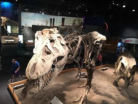 画像: 恐竜の化石展示(弊社スタッフ撮影)