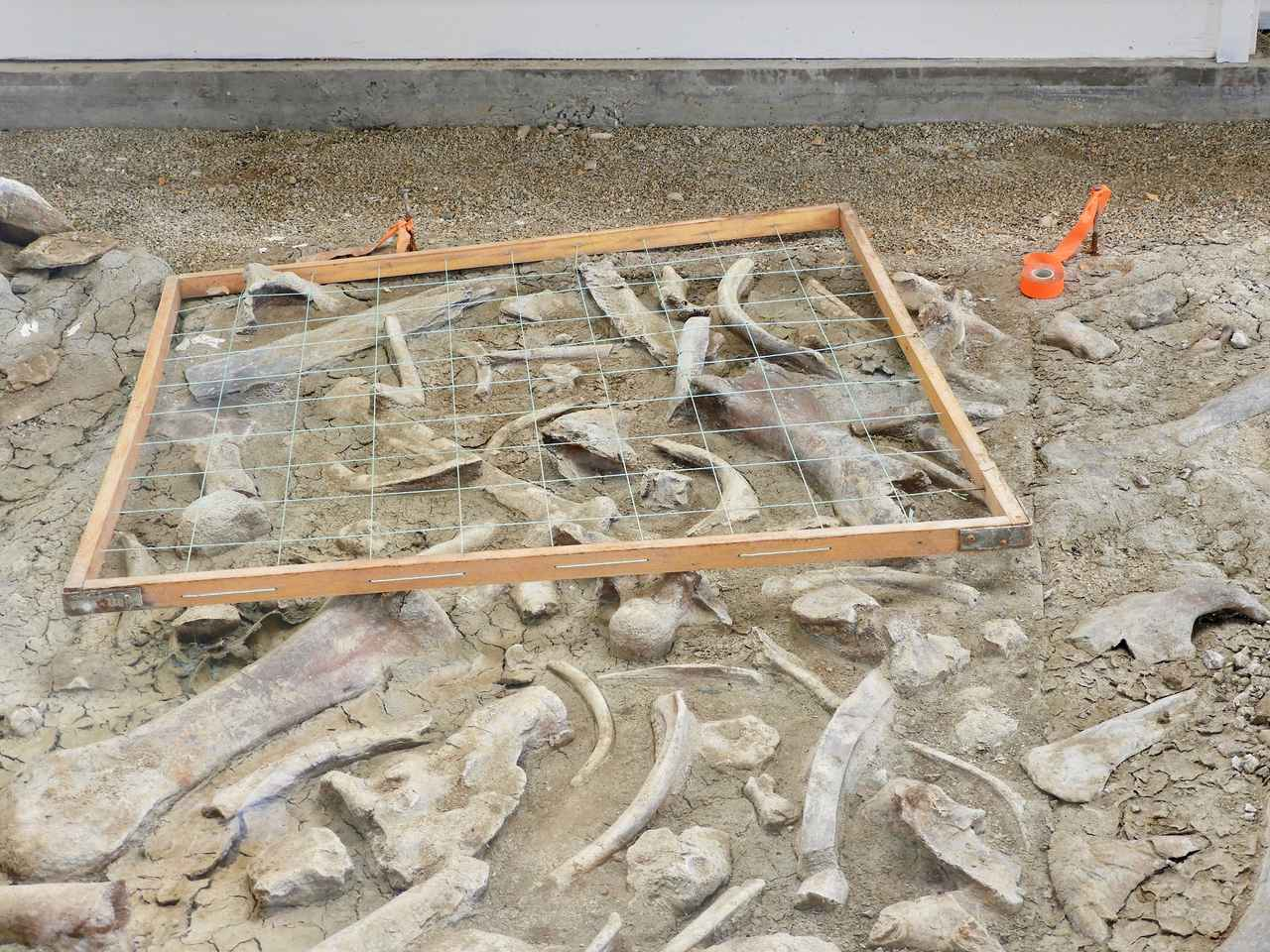 画像: 恐竜の化石発掘場所/弊社スタッフ撮影