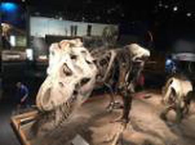 画像1: <オンラインツアー>『ガイドとめぐる恐竜ツアーとカナディアンロッキー60分』|クラブツーリズム