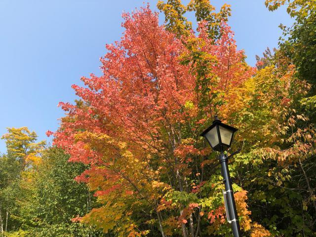 画像: 紅葉のメープル/9/22撮影©Showflex