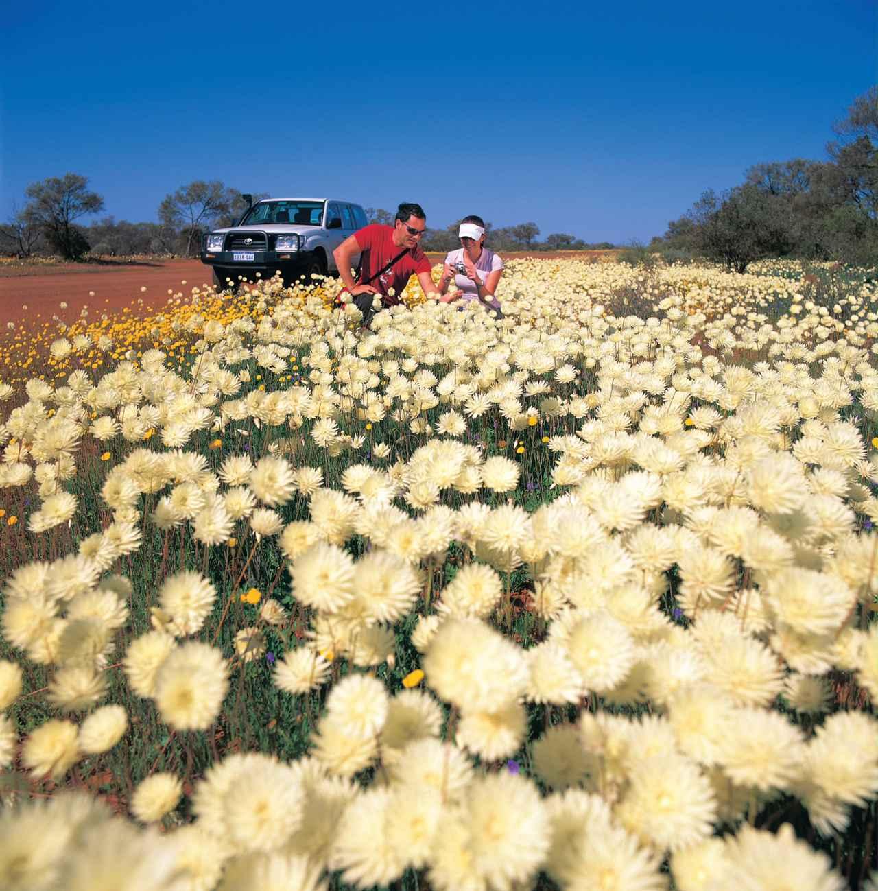 画像: ワイルドフラワー(イメージ)©オーストラリア政府観光局