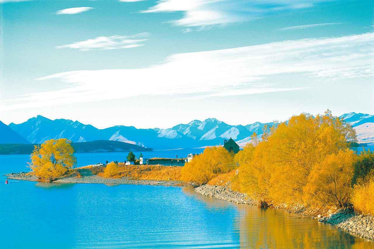 画像: テカポ湖の黄葉(イメージ) 日本では秋になると木々が赤く染まりますが、 ニュージーランドの秋は「黄葉」 です。 4月下旬~5月上旬 に見頃を迎えます。