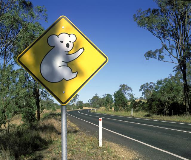 画像: 「コアラに注意!」の道路標識(©️Tourism Australia)