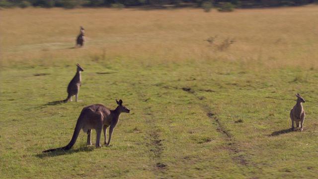 画像: オーストラリア動物イメージ動画(提供/Tourism Australia) youtu.be
