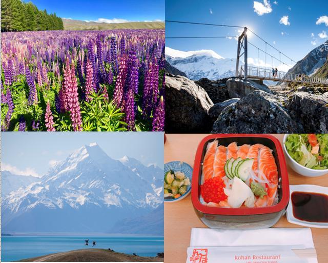画像: ルピナスの見頃は11~12月頃、南島のいたるところで咲き誇ります(ニュージーランド政府観光局提供画像)
