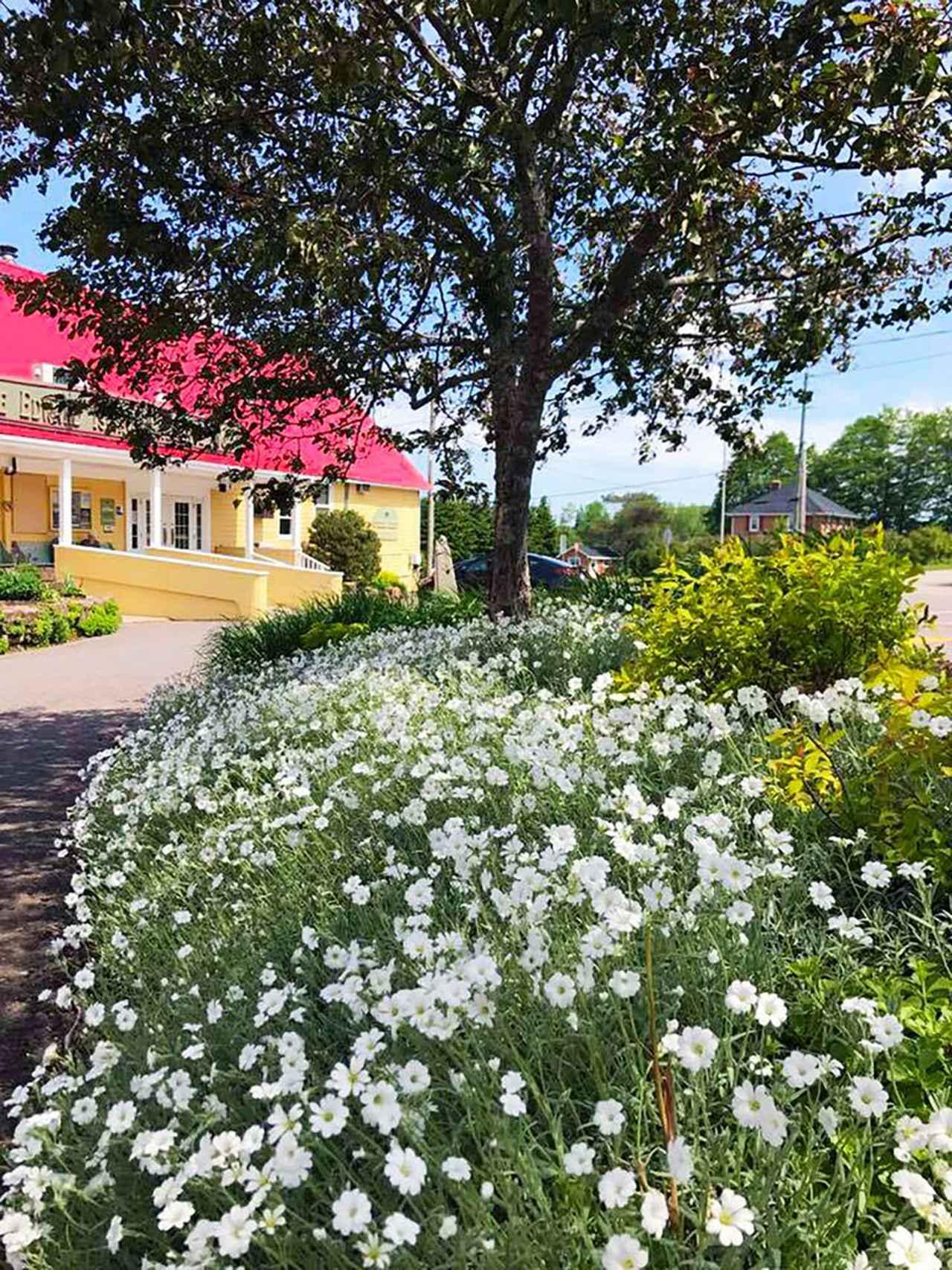 画像1: PEI Preserve Companyのお庭