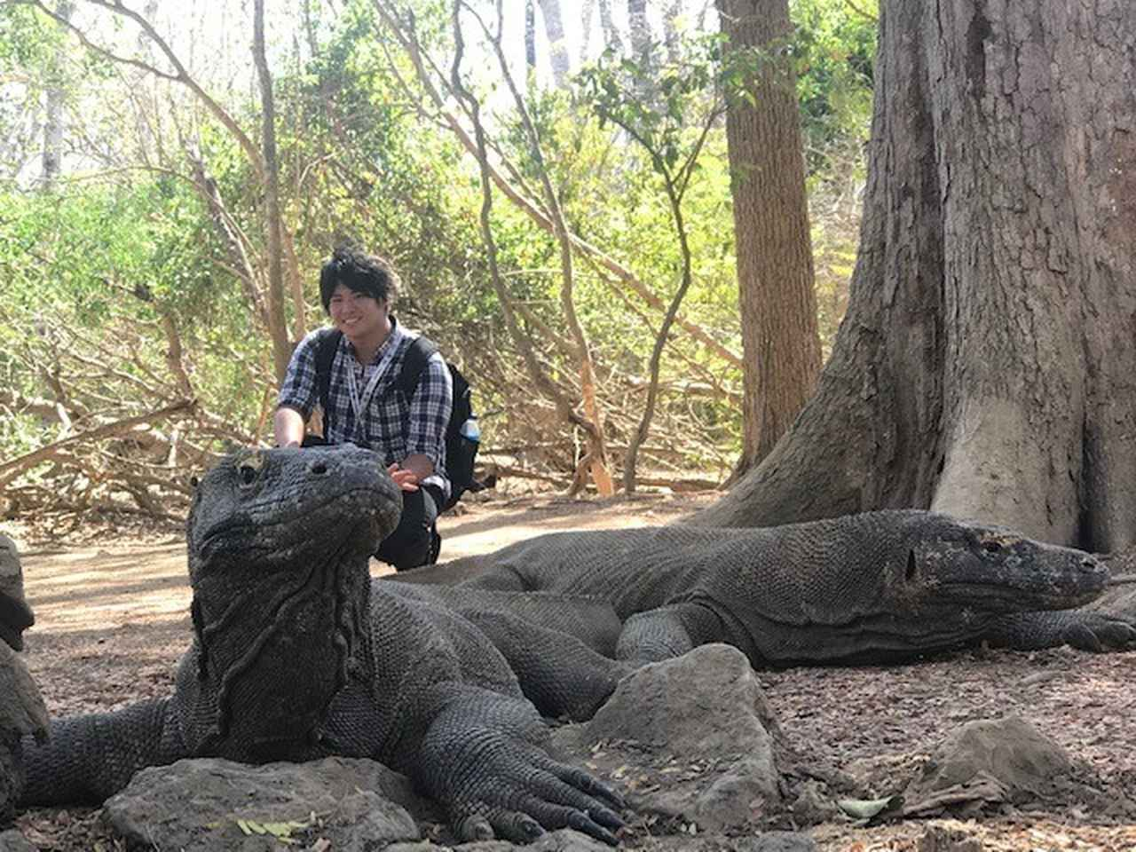 画像3: 【インドネシア】東南アジア最後の秘境!! コモド諸島にコモドドラゴンを見に行きませんか!?