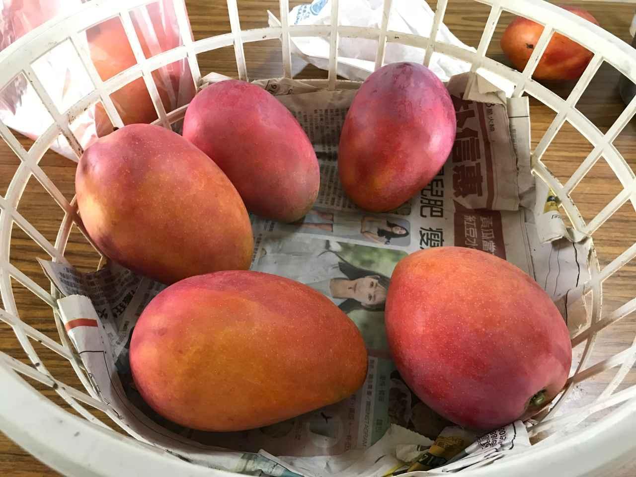 画像: とれたてのマンゴー