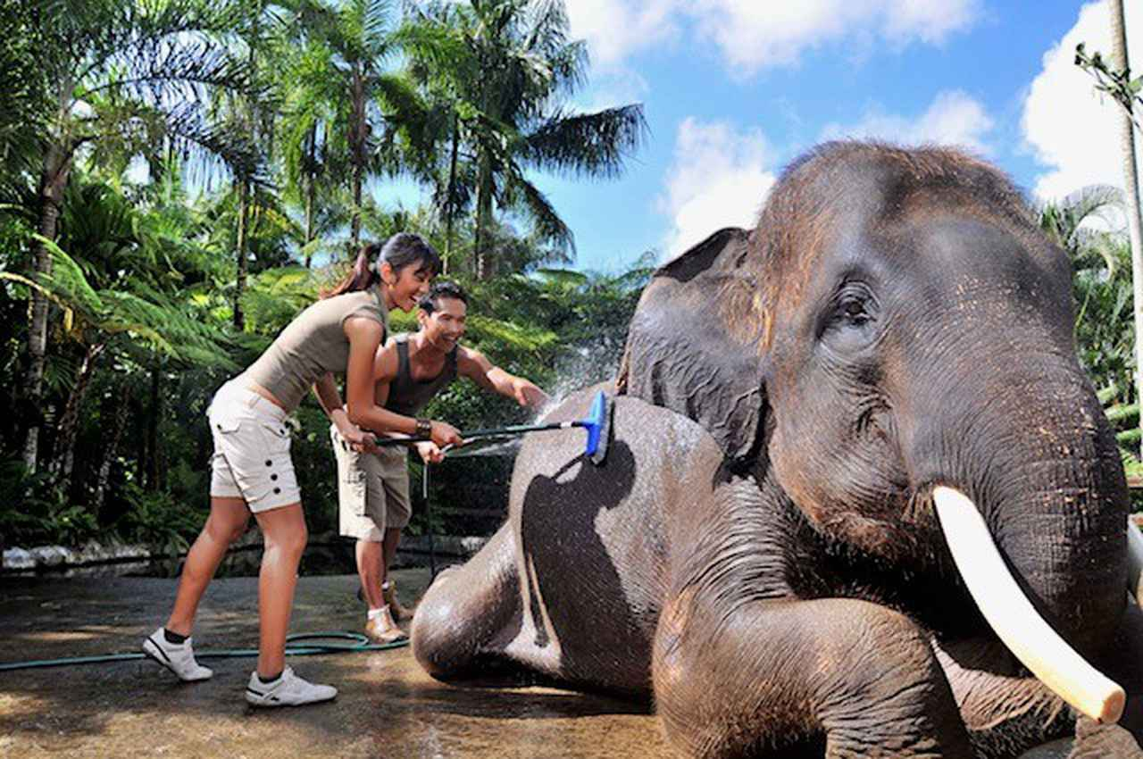 え?ホテルに象がいる!? 世界的にも珍しい!? インドネシアー